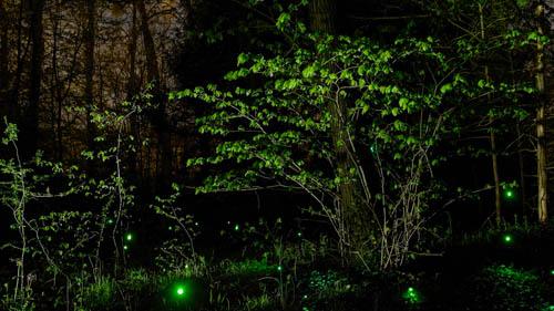 Festival Campagn'art / Edition 15 - Phosphorescence